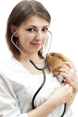 veterinarian and guinea pig