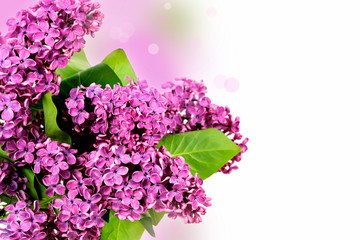 Beautiful Lilac Flowers border