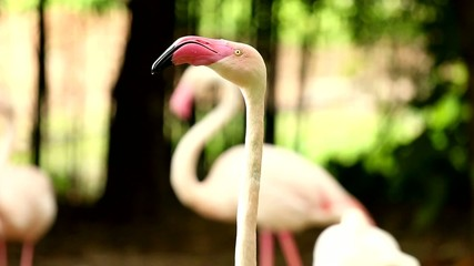 flamingo in chiangmai Thailand