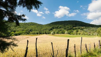 Rural scenery of Tuscany, Italy.