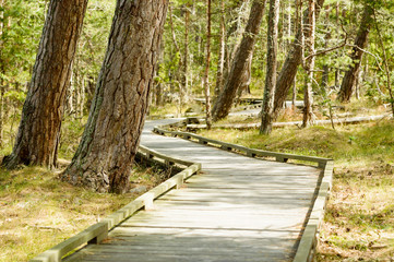 Wooden path in nature