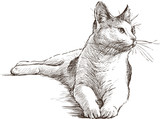 lying cat - 67872745