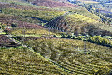Autumnal landscape of vines and hills in Langhe, Italy