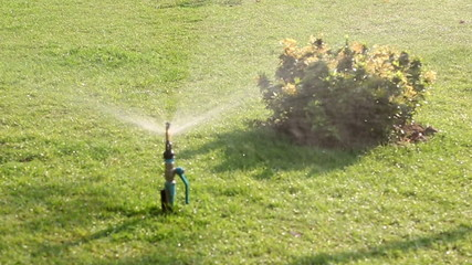 Spraying water of sprinkler on back yard green grass : HD VDO