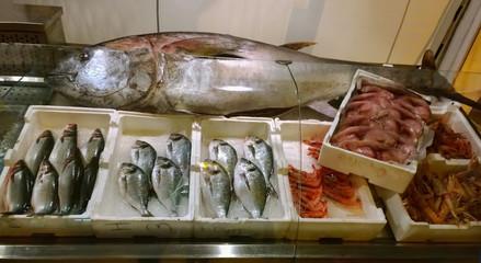fish shop with fresh tuna caught
