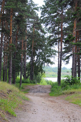 The road to the river through the pine wood.