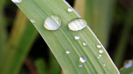 Water drop on green leaf. Outdoors