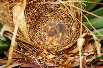 Babies birds sleeping in nest
