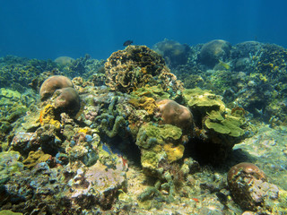 Underwater landscape in coral reef Caribbean sea