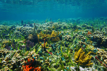 Underwater landscape on a colorful seabed
