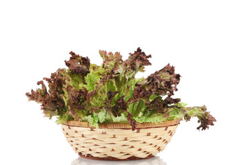 Wicker basket with lettuce.