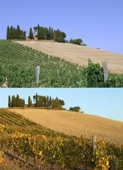 Paesaggio del Chianti in due diverse stagioni: estate e autunno