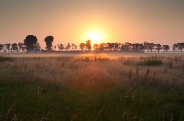 sunrise over misty meadow