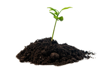 plant in soil isolated