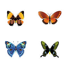 Collection of Butterfly clipart vector download