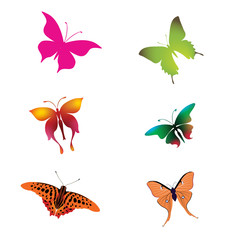 Colorful Butterfly vector download