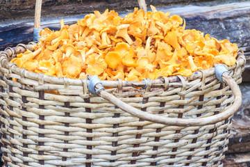 Basket of mushrooms on log background