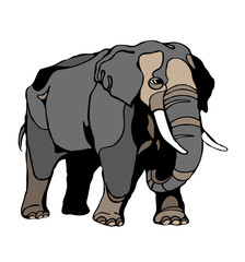 elephant clipart vector