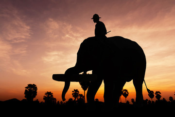 Elephant working on twilight time