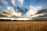 Himmel über Korn