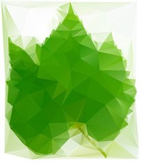 Triangulated Wine Leaf