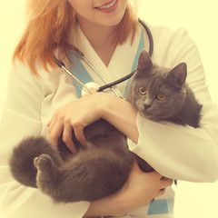 cat in the hands of a veterinarian