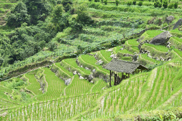 Longsheng Rice Terrace,Guilin, Guangxi, China