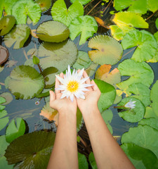 Woman holding lotus flower - waterlily