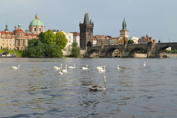 Prague. View of the Vltava River and Karlov Bridge