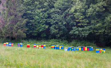 Beehives in forest