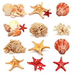 Collection of sea stars, shells and coral