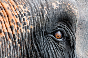 Close-up shot of Asian elephant eye
