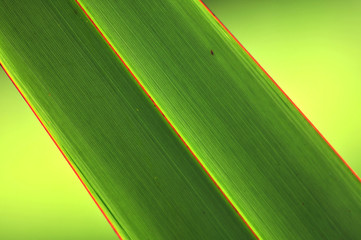 Flax leaf close-up showing structure