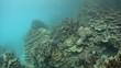 Lagoon Coral Reef