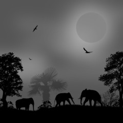 Wild elephants at sunset