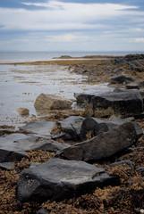 pietre e alghe #1