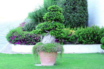 Garden planter with exotic tree