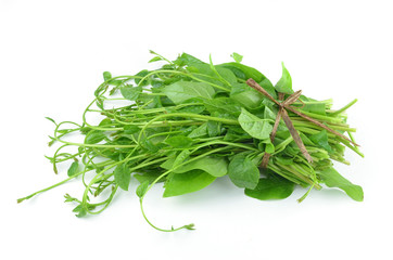 vegetable Ceylon Spinach