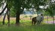 木陰と馬2