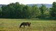 草原と馬4