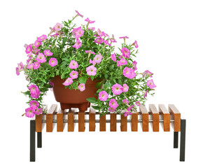 Pink petunia flowers in flowerpot on wooden bench isolated on wh