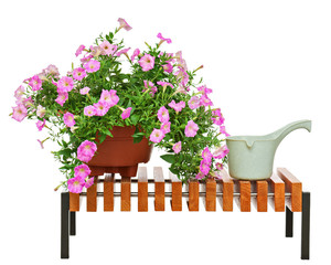 Pink petunia flowers in flowerpot with garden accessories.