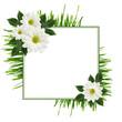 Daisy flowers  arrangement and a frame