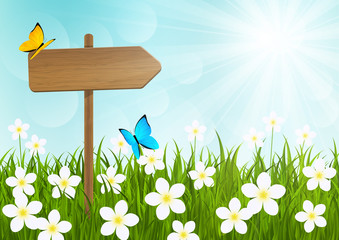 Sunny meadow with wooden signboard