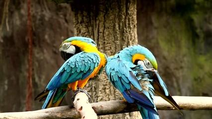 macaw in chiangmai nightsafari chiangmai Thailand