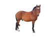 horse - 67904770