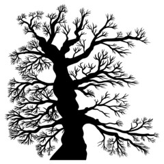 Uralter, unbelaubter Baum – Vektor, schwarz, freigestellt