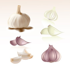 Set of Garlic Vector Clipart Symbol