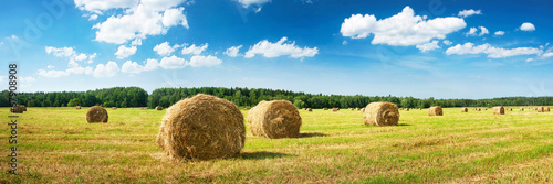 Hay bales with blue sky and fluffy clouds - 67908908