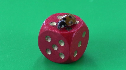 success concept – ladybug ladybird on red game dice